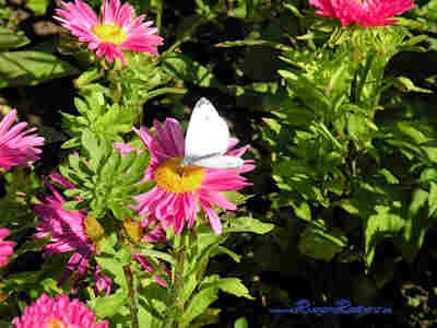 Blumenmotiv aus dem Garten rund ums Ferienhaus in Putbus / Rügen